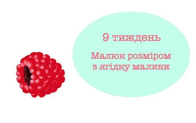 9 тиждень вагітності розмір ембріона